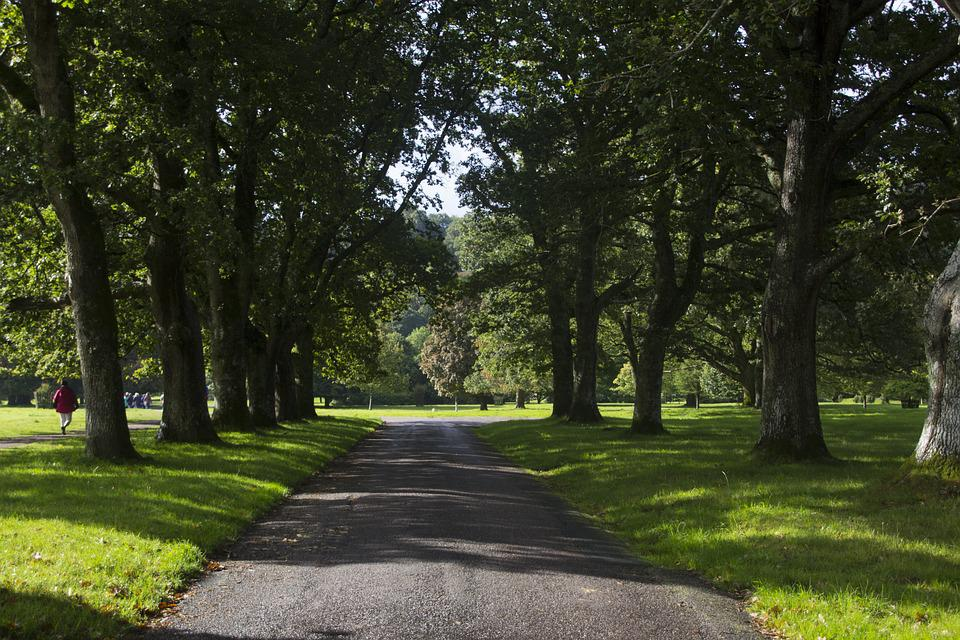 Foto Gratis Avenue Pohon Jalan Pemandangan Gambar Hutan Besar