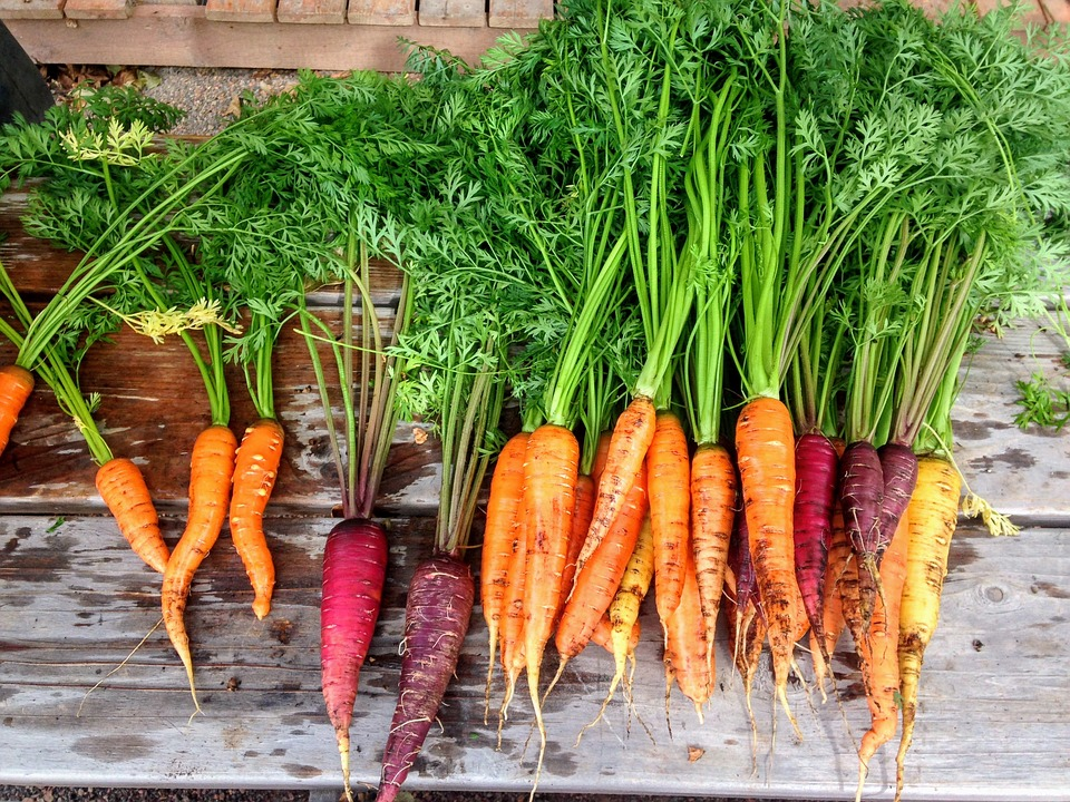 Organic Vegetables: Are They Really Healthier