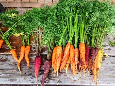 ニンジン, 生産, 食品, 野菜, 新鮮な, 健康, 有機, オレンジ, ルート