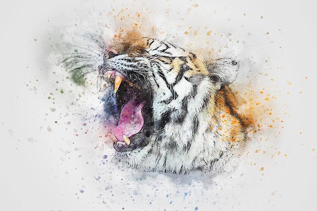 tiger roar animal  u00b7 free image on pixabay