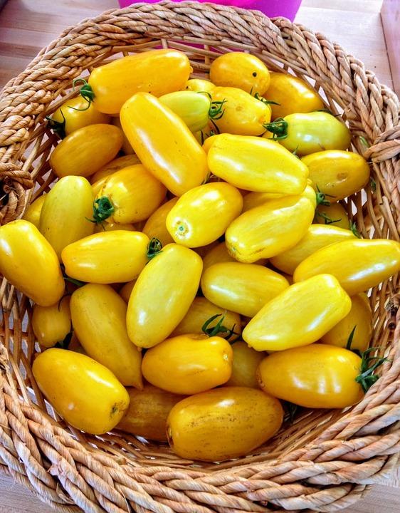 tomater gul korg tomat mogen organiska jordbruk b070a809f7b4f