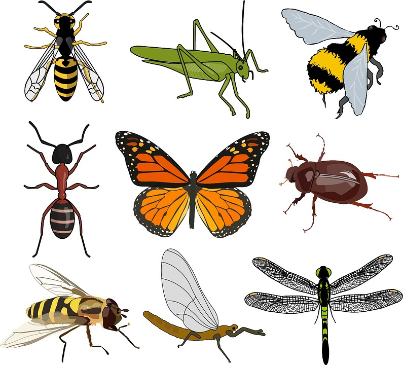 Insect Collection Wild · Free image on Pixabay