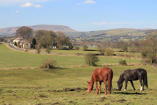 Horses, Pendle Hill, Lancashire, Colne