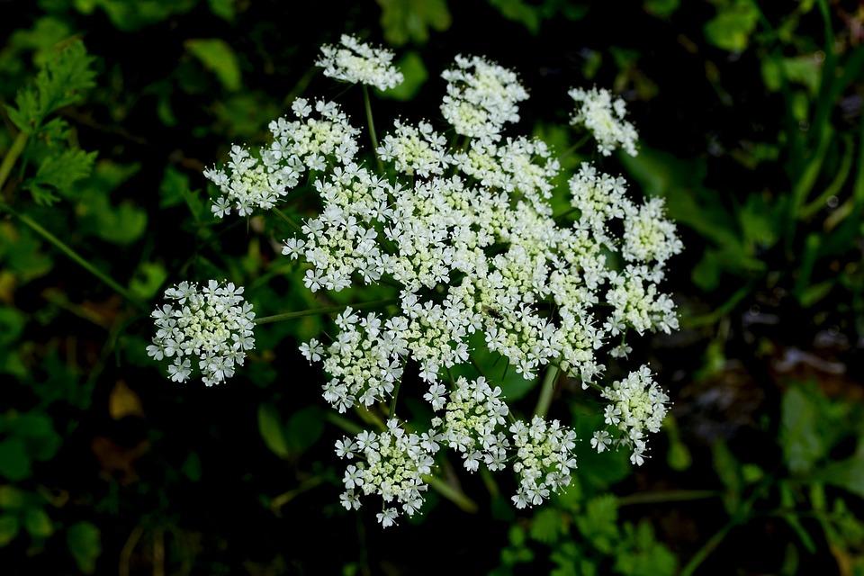 Flores Silvestres Otono Foto Gratis En Pixabay