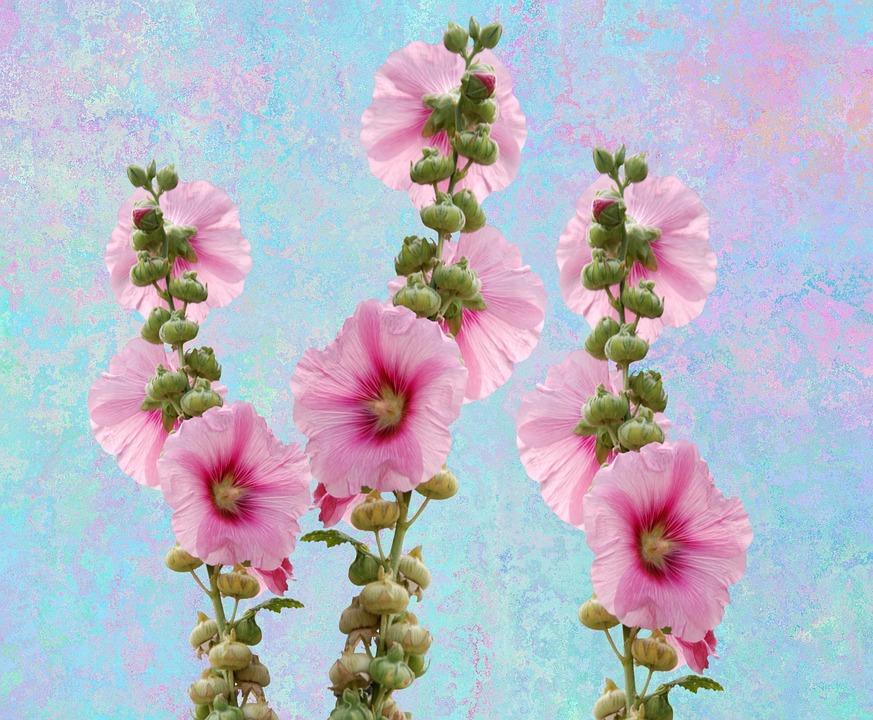 Wild flowers mallow hollyhock free photo on pixabay wild flowers mallow hollyhock flower garden blossom mightylinksfo
