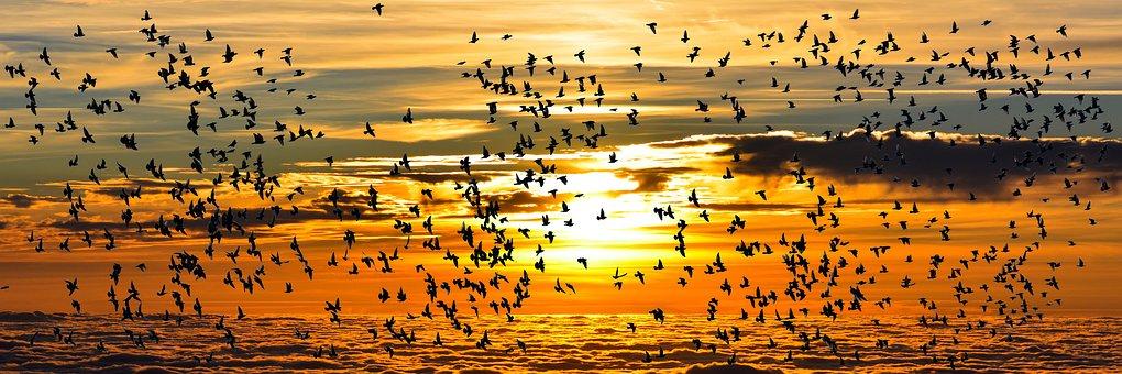 Nature, Animaux, Bird