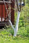 spring, whitewash