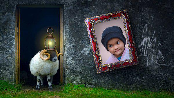 Composing, Sheep, Animal, Door, Home