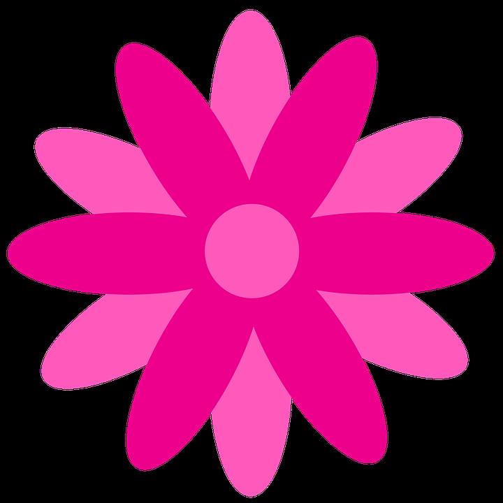 Flor Rosa Margaret De Imagens Grátis No Pixabay