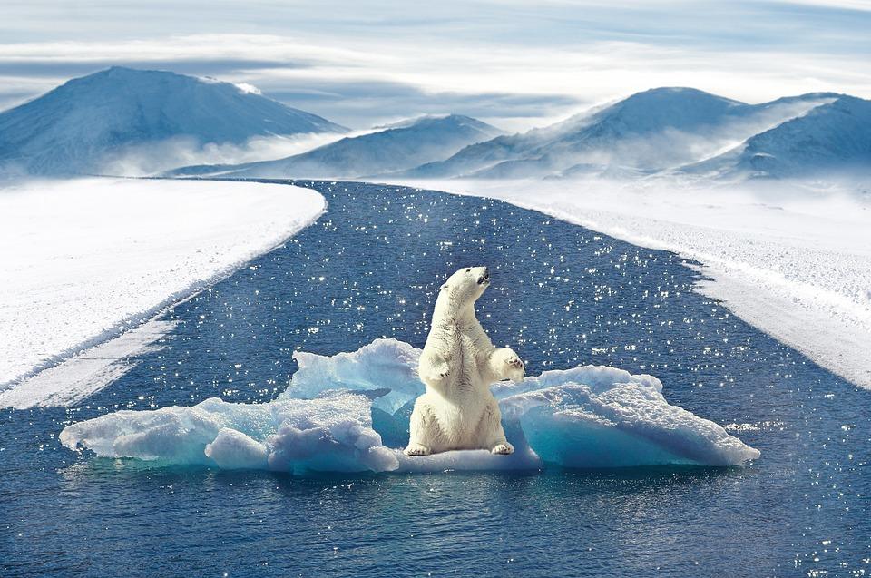 Oso Polar, Cambio Climático, Bear, Depredador, El Agua