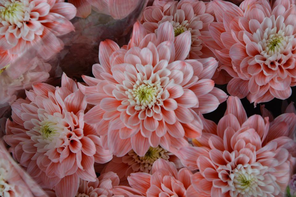 Flores de Primavera, rosas, flor, flores,   Flores   Pinterest ...