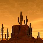 desert, rock, cactus