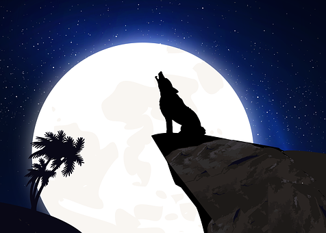 Howl - Free pictures on Pixabay  Howl - Free pic...
