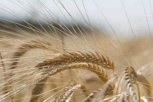 Из Ставропольского края отгружена первая партия пшеницы урожая 2019 года в Азербайджан