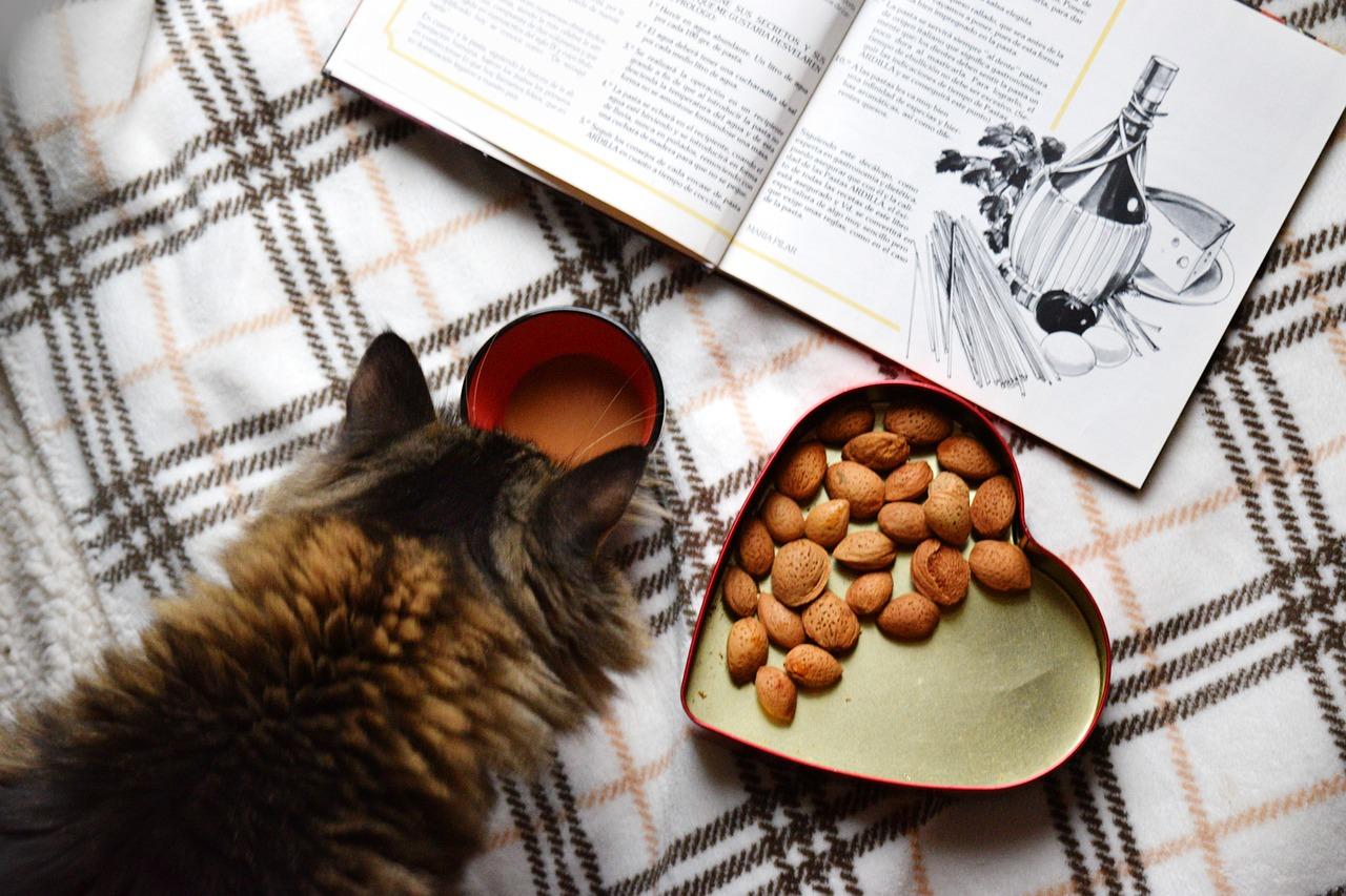 Cómo elegir la mejor comida para gatos