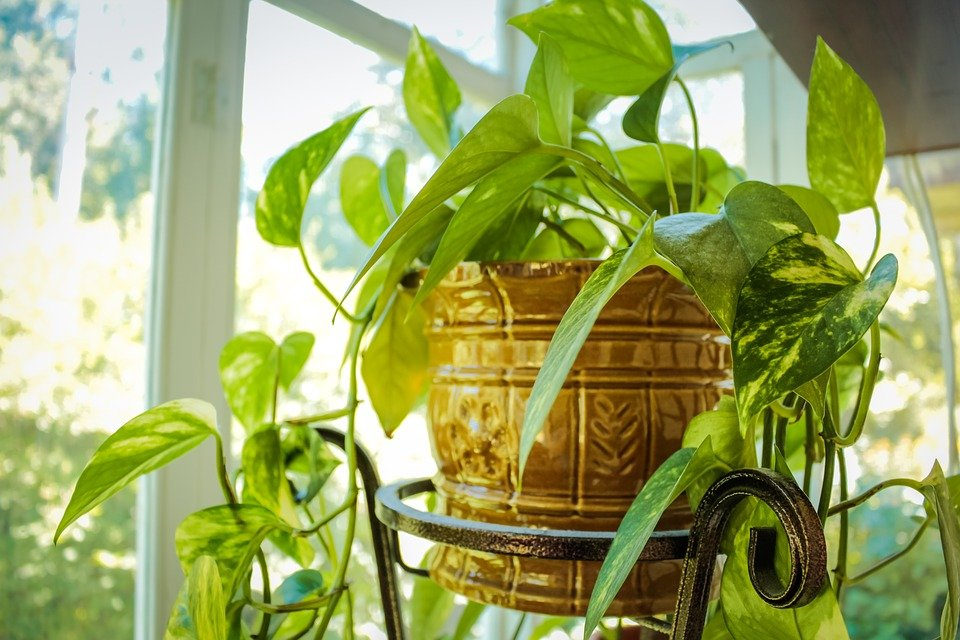 8 Environmentally Friendly Ways To Clean Your Home