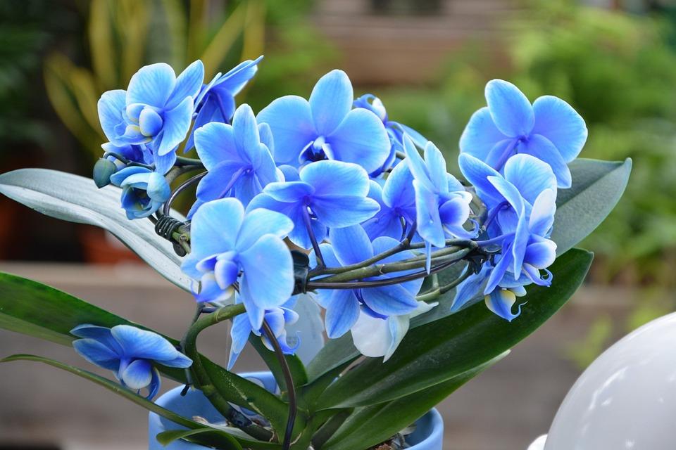 Las Flores De La Orquidea Foto Gratis En Pixabay