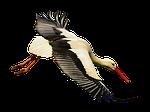stork, fly, landing