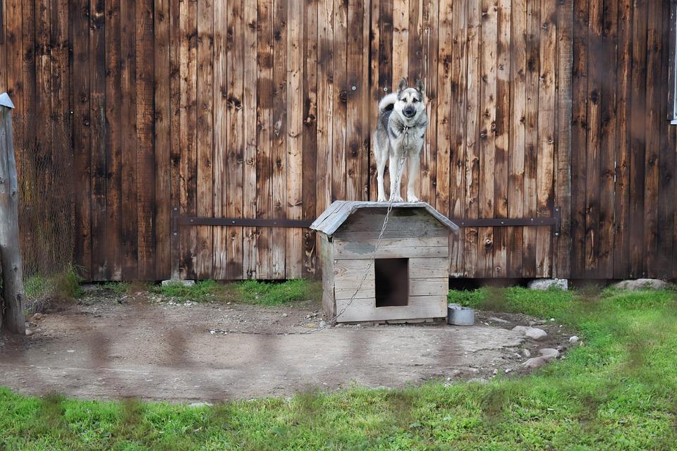 Perro, Encadenado, Kennel, Valla, Cerca De Alambre