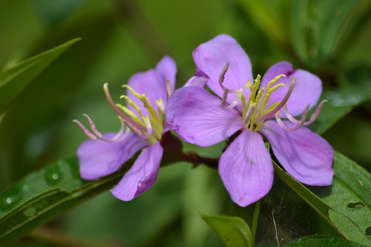 Флора цветок в картинках