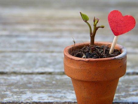 Flowerpot, Engine, Heart, Earth, Grow