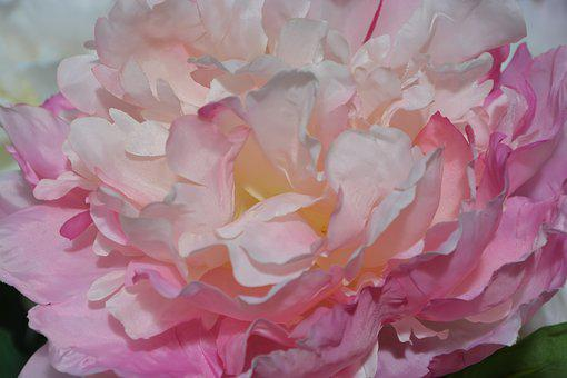Fabric flower images pixabay download free pictures flower fabric flower color pink white mightylinksfo Images