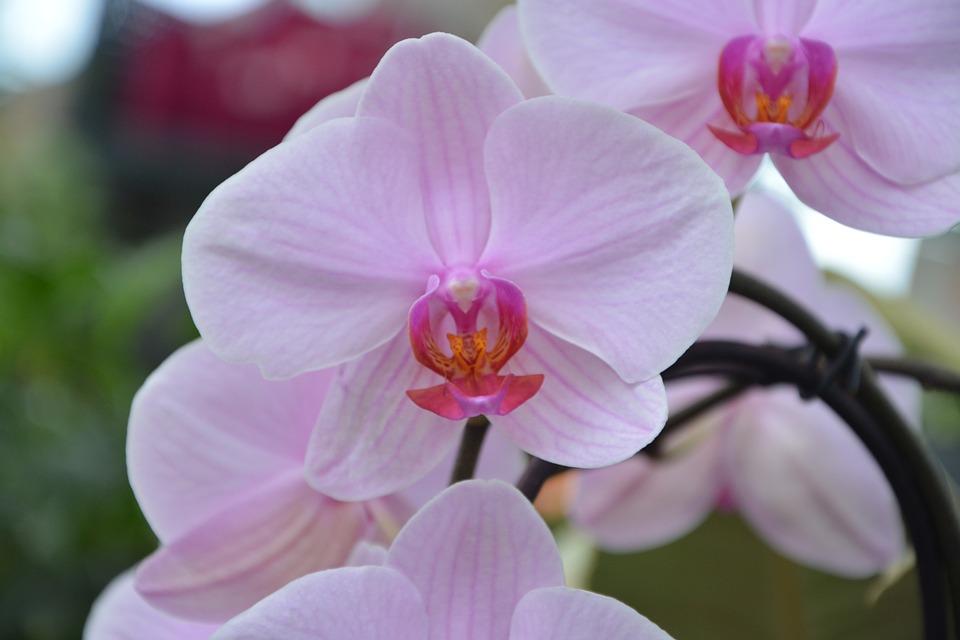 Fleur Orchidee Rose Decoratif Photo Gratuite Sur Pixabay