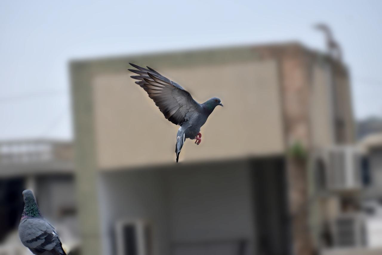 восточной мифологии картинка голубь спускается хотите