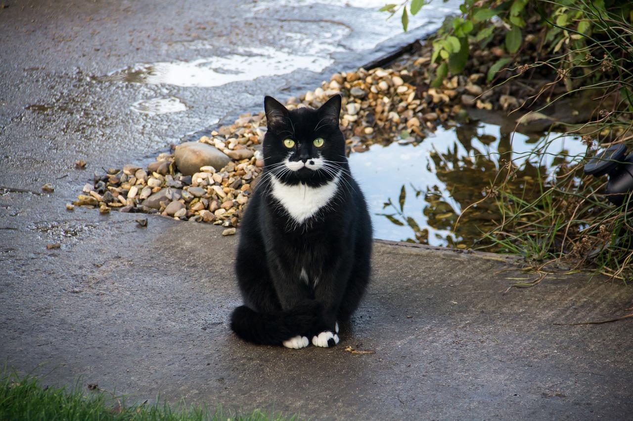 comfort zone feliway multicat diffuser and refill for cat calming