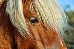 pony, horse, animal