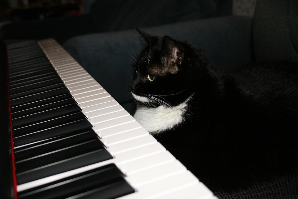 Paisley, Cat, Cat Sitting At Piano, Piano, Black Cat