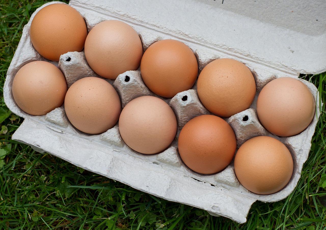 Hatching Eggs Easter Egger  mypetchickencom