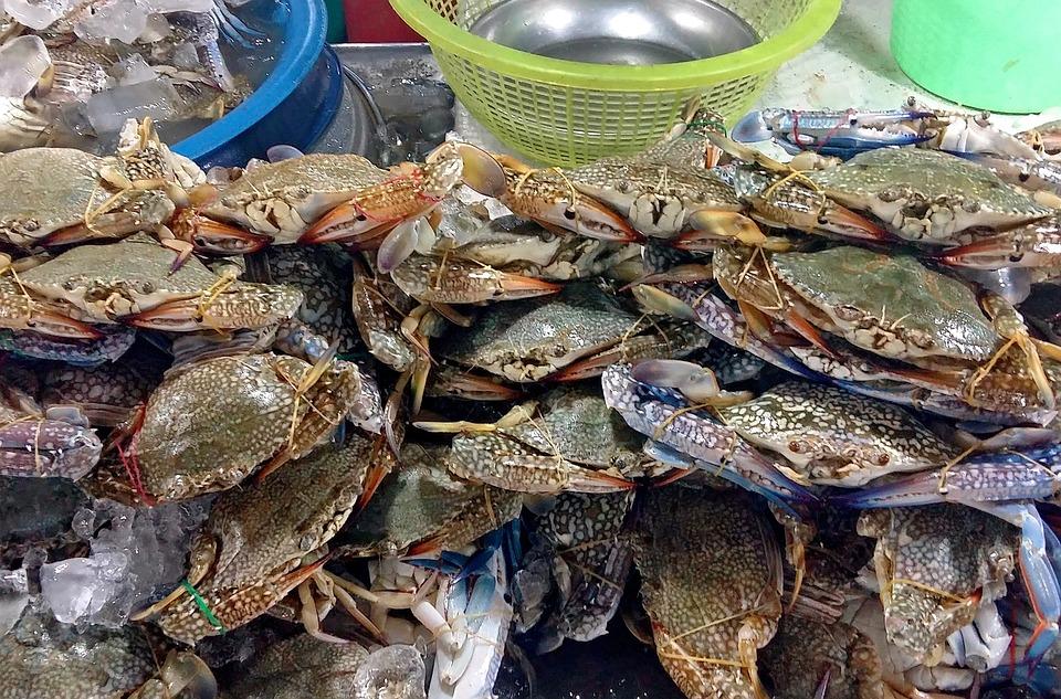 Pesca, Barcos, Color, Océano, Mar, Marina, Costa, Barco