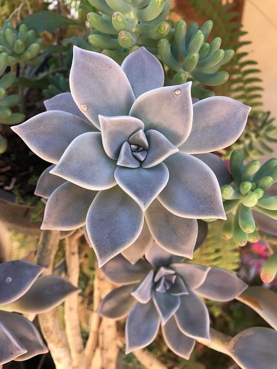 Ver fotos de plantas suculentas 64