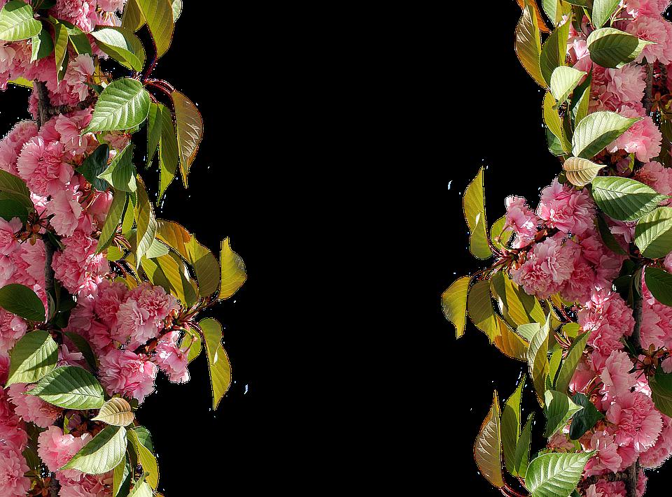 Roses Frame Pink Rose Picture · Free image on Pixabay
