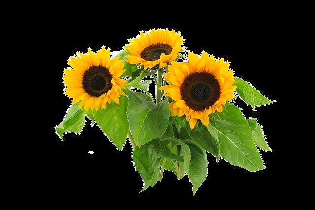 Sunflower Autumn Still Life 183 Free Photo On Pixabay