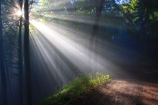 Sunbeam, Herbstnebel, Autumn Forest