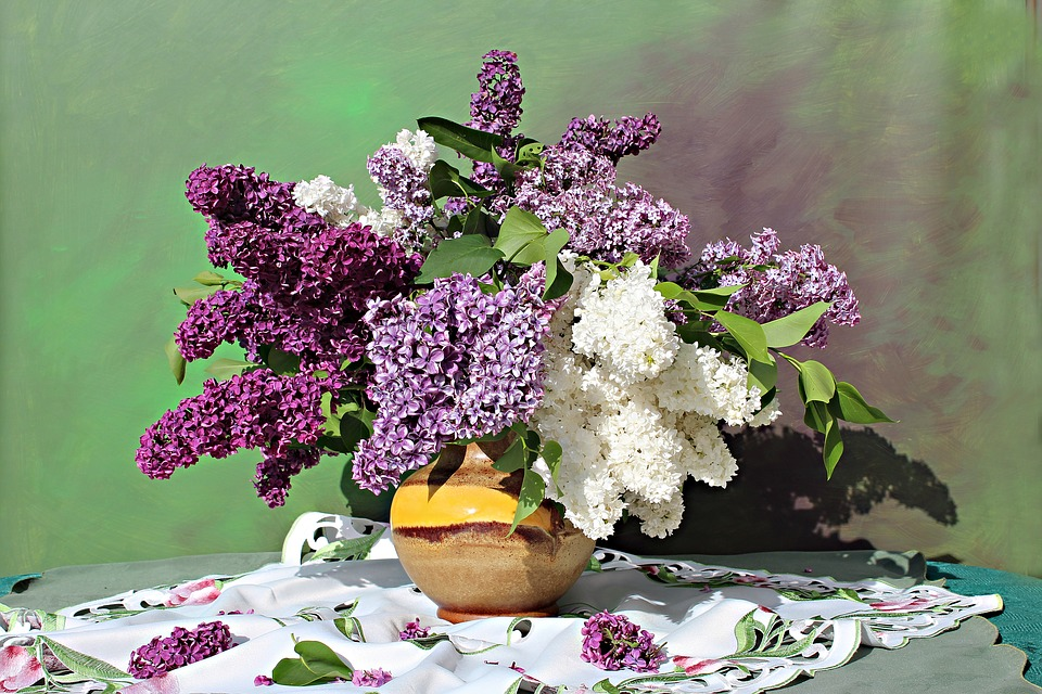 ca2dc6a5f50e Lilac Images - Pixabay - Download Free Pictures