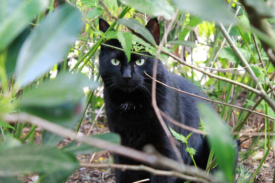 mačička picuter
