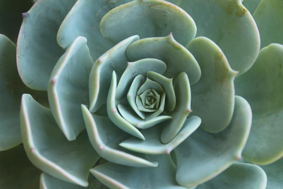 free photo  succulent  plant  green - free image on pixabay