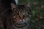 cat, dim, about
