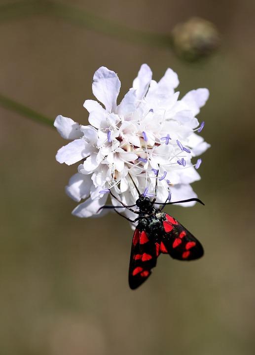 Farfalla Da Colorare Ali Foto Gratis Su Pixabay