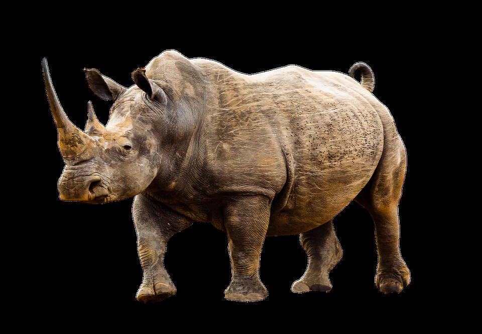 Animales, Animales Salvajes, Rinoceronte, África