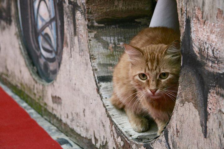 знакомство котенка с улицей