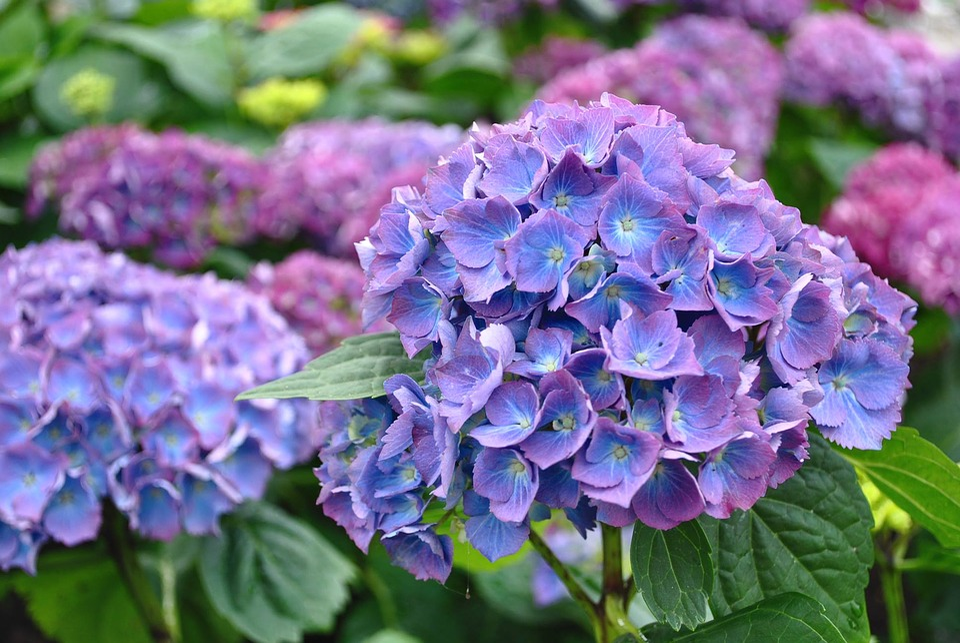 Blumen Garten Botanischer Kostenloses Foto Auf Pixabay