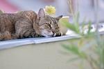 cat, rest, animals