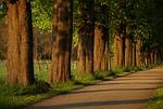 away, avenue, chestnut