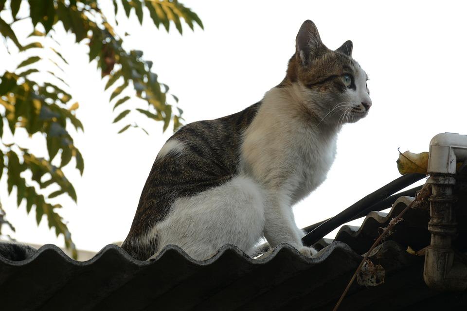 Gambar Makanan Kucing Bagus Diet Foto Gemuk Gambar Di