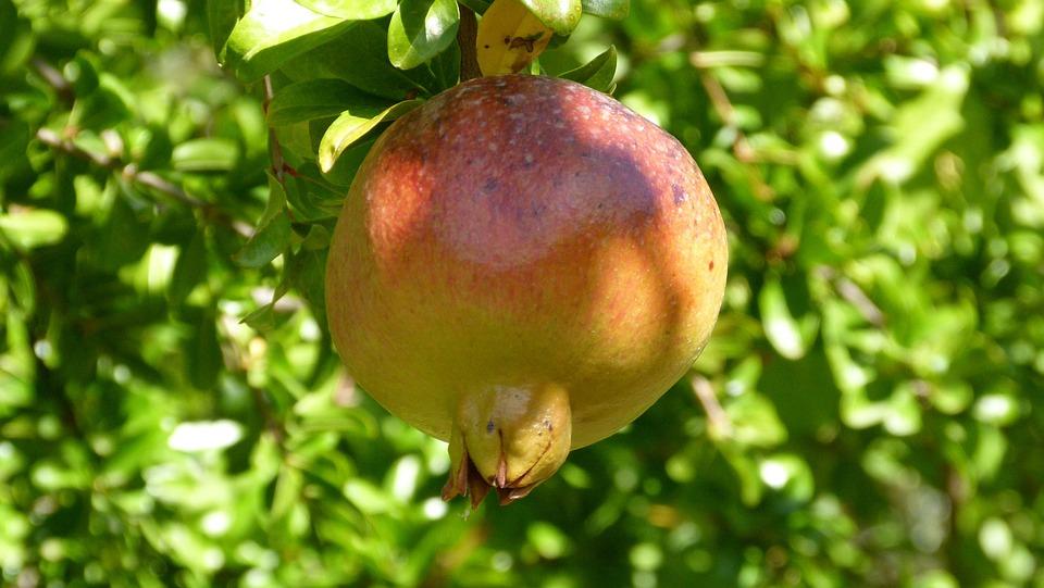 granada fruit autumn free photo on pixabay