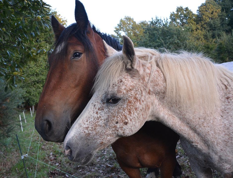 Cavalli Complicit Abbraccio La Tenerezza Di Affetto